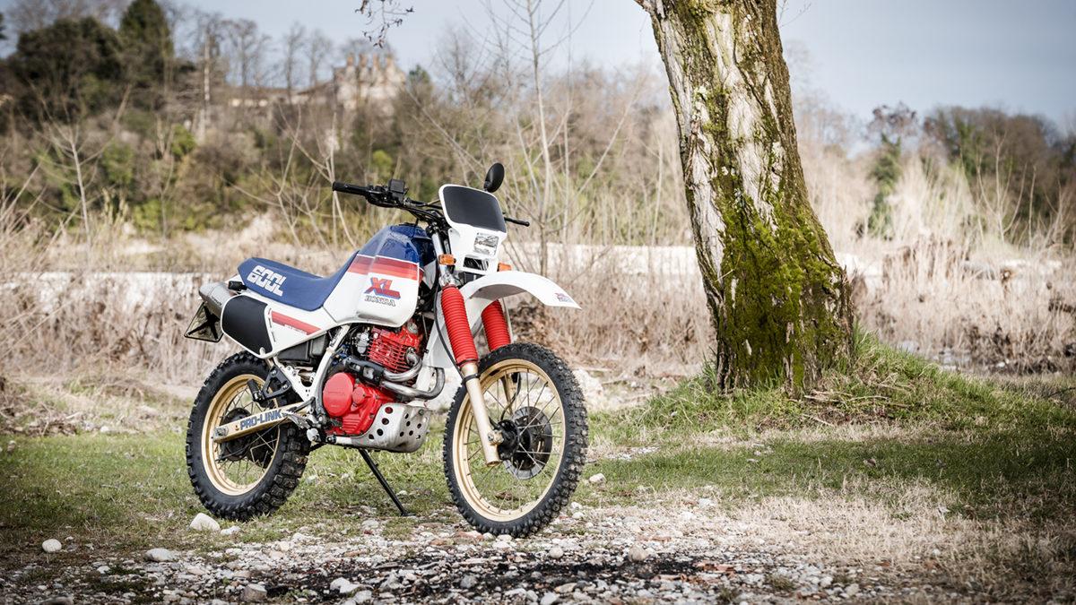 36 FilippoMolena NEC HondaDom L FRD7215