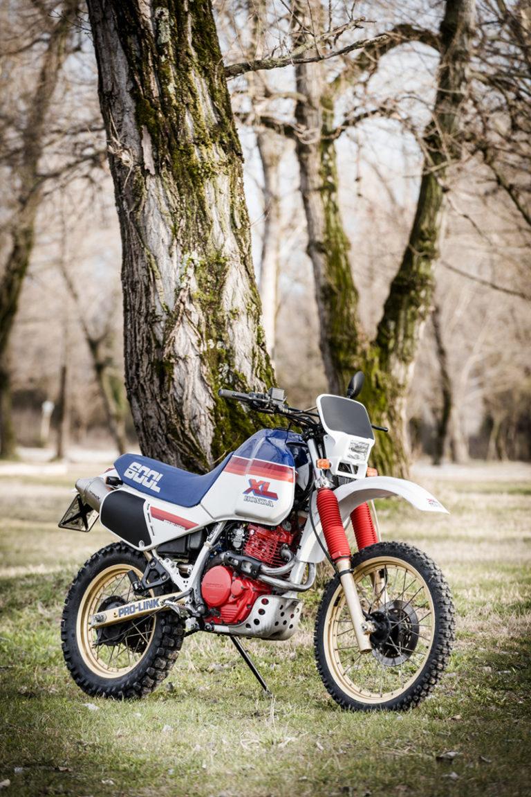 52 FilippoMolena NEC HondaDom L FRD7233